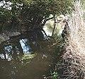 River Roach - geograph.org.uk - 211941.jpg