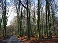 Road in Lambridge Wood - geograph.org.uk - 626593.jpg