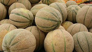 Stacked rockmelons (cantaloupe) in a fruit and...