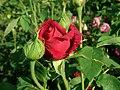 Rosa L.D. Braithwaite 2019-06-04 6259.jpg