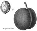 Rozier - Cours d'agriculture, tome 8, pl. 31, royale de Tours.png