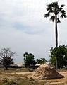 Séléki-Termites.JPG