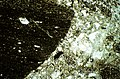 SE Mt Jackson photomicrograph of flow-folated basalt clast in breccia.jpg