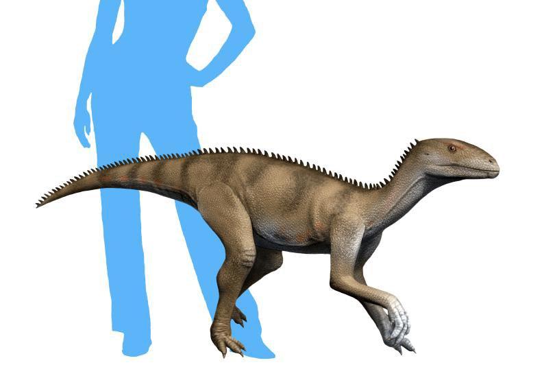 Sacisaurus NT small