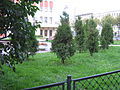 Sady & Parky Sankt-Peterburg 2010 0199.jpg