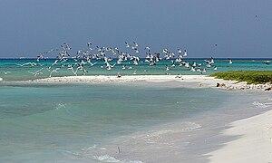 Las Aves archipelago - Image: Safarisailing 01