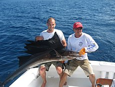 Sailfish costa rica 1.jpg
