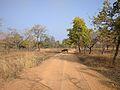 Sambhar Deer 1.jpg
