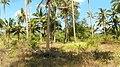 Samui (2014 febr.) - panoramio (83).jpg