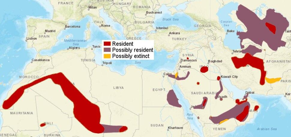 SandCat distribution