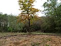 Sandbox in the Hambach forest 02.jpg