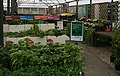 Scarborough Fair - (Seen in Dobbies, Aberdeen) - geograph.org.uk - 540675.jpg
