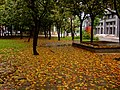 Scene of Autumn Fallen Leaves in a Park on Lishing Rd., Taichung.jpg