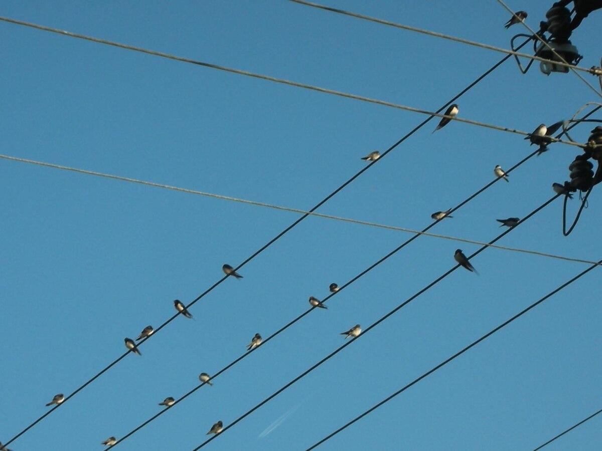 Migration Des Oiseaux Wikipedia