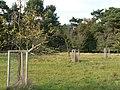 Schwanheimer Düne Streuobstwiese.jpg