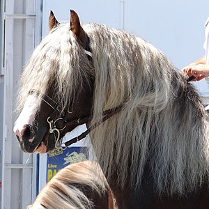 Horsehair - Mane hair is shorter and softer than tail hair.
