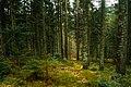 Schwarzwald10.jpg