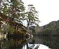 Scots Pine on an Island - geograph.org.uk - 437498.jpg