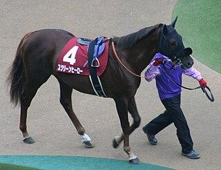 Screen Hero Japanese-bred Thoroughbred racehorse