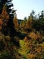 Secret Path - panoramio.jpg