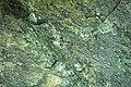 Serpentinite (East Dover Ultramafic Body, Ordovician; roadcut southwest of East Dover, Vermont, USA) 4.jpg