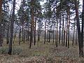 Seversk, Tomsk Oblast, Russia - panoramio (178).jpg
