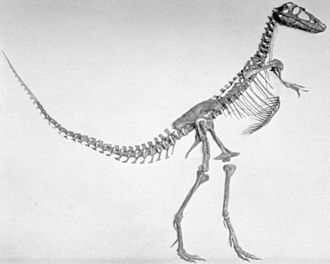 Gorgosaurus - Type specimen of Gorgosaurus sternbergi (AMNH 5664), now recognized as a juvenile Gorgosaurus libratus
