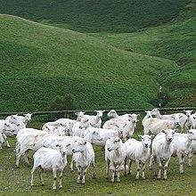343aba691ff Wool - Wikipedia