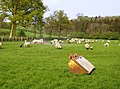Sheep pasture and a digger bucket - geograph.org.uk - 461700.jpg