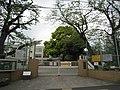 Shinagawa Ward Nakanobu Elementary School.jpg
