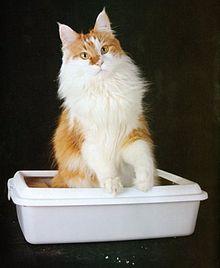 Признаки заболевания у кошки у кошки