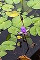 Singapore (SG), ArtScience Museum, Water Lilies -- 2019 -- 4554.jpg