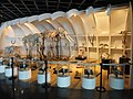 Skeletons - Kunming Natural History Museum of Zoology - DSC02369.JPG