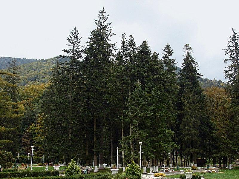 File:Slănic Moldova, în parc - panoramio (6).jpg