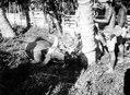Slakt av en buffel. Männen har bamburör för att uppsamla blodet då halsen avskäres - SMVK - 010764c.tif