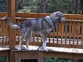 Sled Dog Discovery & Musher's Camp 21.jpg