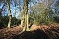 Small Wood - geograph.org.uk - 1150626.jpg