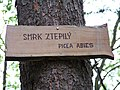 Smrk ztepilý - Picea abies, tabulka.jpg