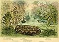 Snakes- curiosities and wonders of serpent life (1882) (14775930234).jpg