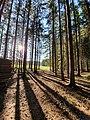 Sonneneinstrahlung in Wald 51854421.jpg