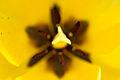 Spring (5606839268).jpg