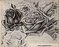Spring 1900 (1900) (20567877621).jpg