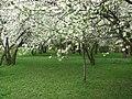 Spring 2008 - Cluj-Napoca (2408342264).jpg