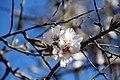 Spring came! (5436849997).jpg