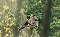 Spring in Epsom (7129542523).jpg