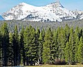 Spring in The High Country. Yosemite 5-20-15 (18404769434).jpg