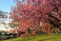 Spring is here! (7096883553).jpg