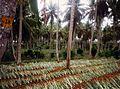 Srilanka ananas.jpg