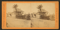 St. Francis St., with date palms, from Robert N. Dennis collection of stereoscopic views.png