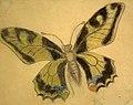 Stanisław Wyspiański - Motyl.jpg
